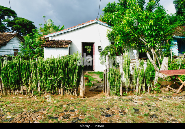 Typical house in the cuban countryside - Stock Image