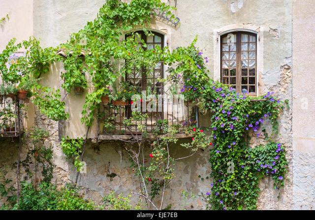 Climbing Vine House Stock Photos Climbing Vine House