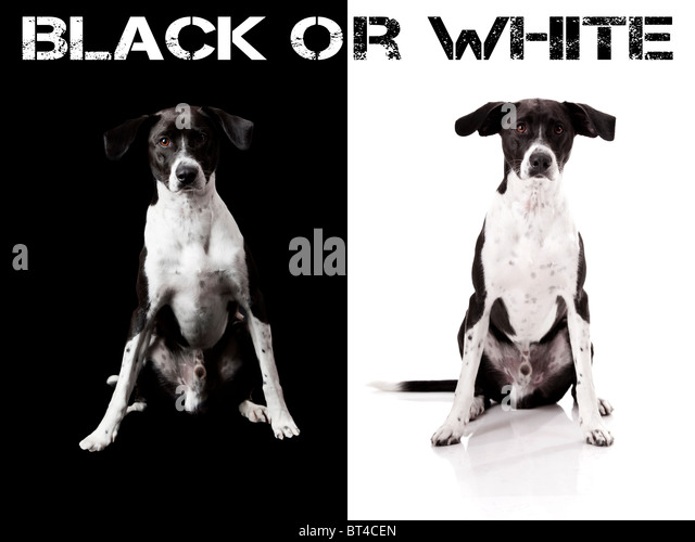 Nice concept of a beautiful nice dog on different backgrounds - Stock-Bilder