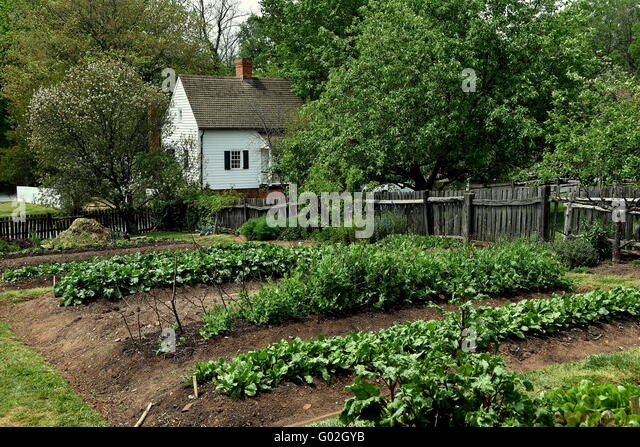 Garden beets stock photos garden beets stock images alamy for North carolina vegetable gardening