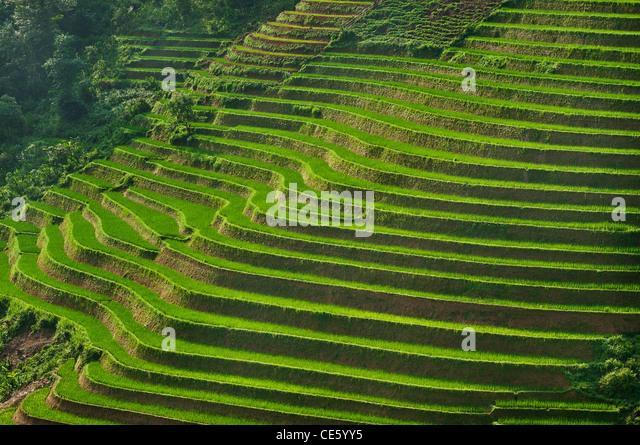Rice terraces, Vietnam - Stock Image