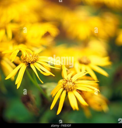 close-up color image defocused flower flowerbed full frame garden numerous plants quantity square summer variation - Stock-Bilder