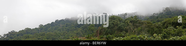 Tropical misty rainforest jungle view, Malaysia - Stock Image