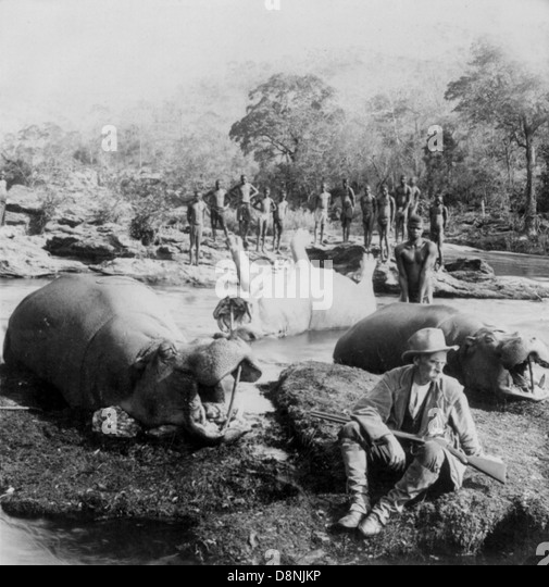 Hippopotamus hunt on Mlembo River, Rhodesia, Africa - Stock Image