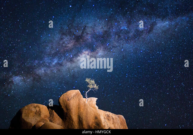 A lone tree grows from a granite koppie under the Milky Way - Stock Image