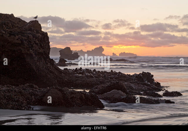 Sunset at the rocky foreshore at Kaipakati Point, Woodpecker Bay, West coast, New Zealand - Stock Image