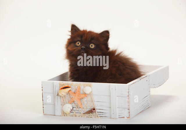 cat pictures to print