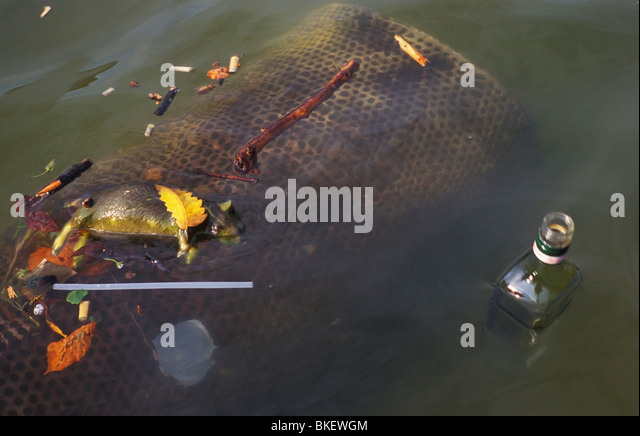 Bloated Dead Body In Water Bloated Animal Stock P...