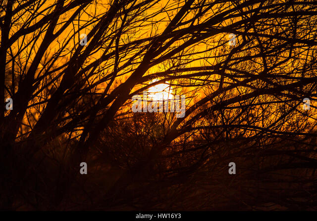 Sunset - Australian Bush - Stock-Bilder