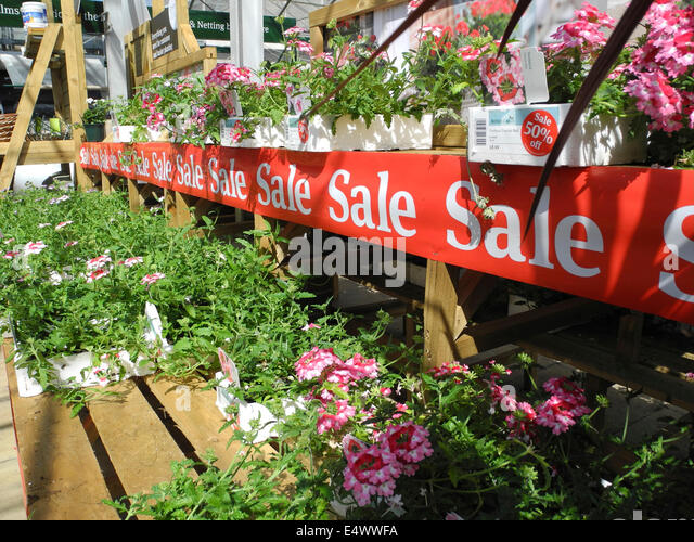 garden centre sale half price surplus overstock plants EDITORIAL USE ONLY - Stock Image