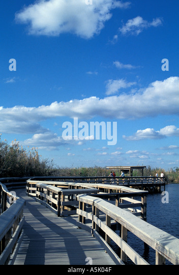 Florida Everglades National Park Anhigna Trail boardwalk - Stock Image