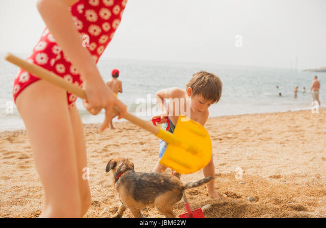 Boy and girl brother and sister playing with dog and digging in sand with shovels on sunny beach - Stock Image