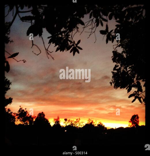 Tree framed sunset - Stock Image