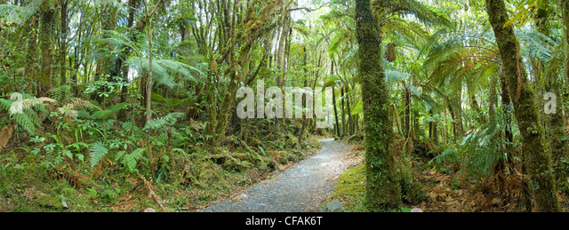 Temperate rainforest, West Coast, New Zealand - Stock Image