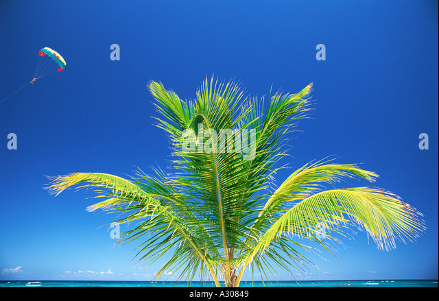 Dominican Republic Bavaro Beach  Punta Cana person parasailing and palm tree - Stock Image