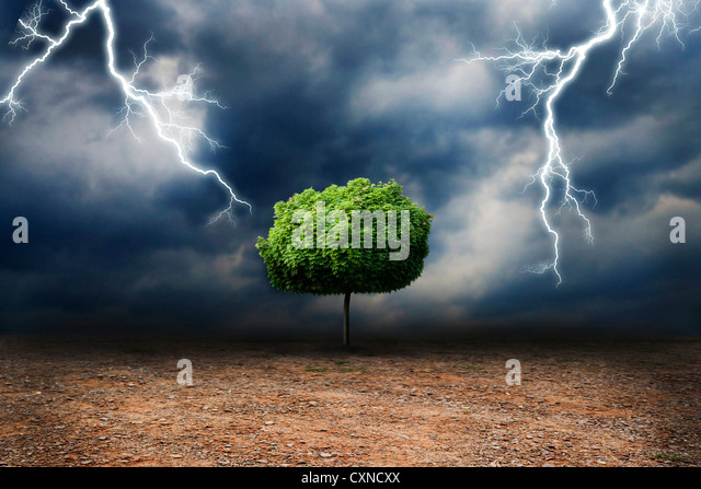 lone tree on a desert land, under a storm global warming and climate change concept - Stock Image