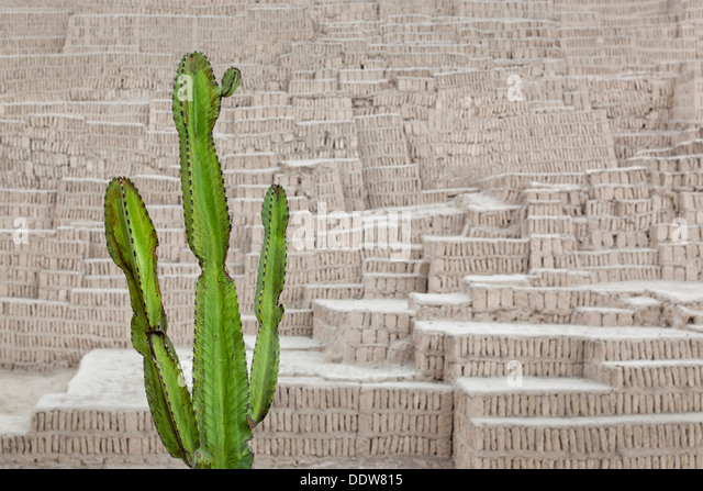Huaca Pucllana: detail of adobe mud brick walls dating back to Lima culture of 400AD, with green candelabra euphorbia - Stock Image