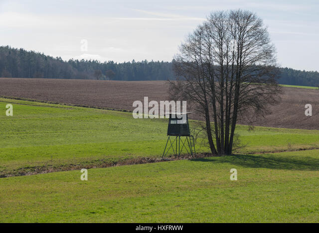 High seat for hunters - Stock Image