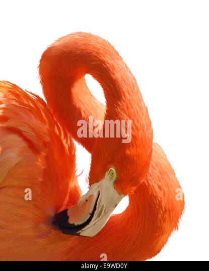 Digital Painting Of Pink Flamingo Portrait - Stock Image