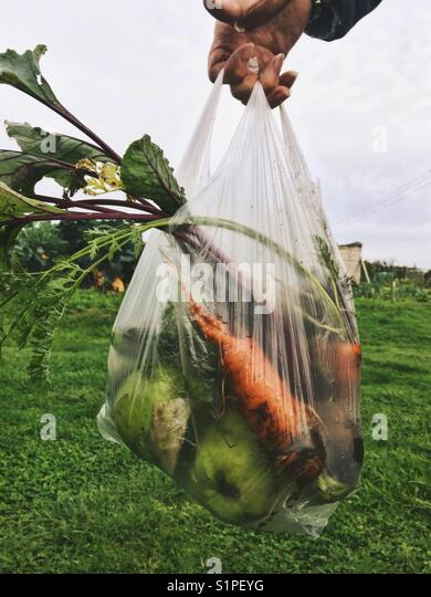 A bag of allotment vegetables - Stock Image