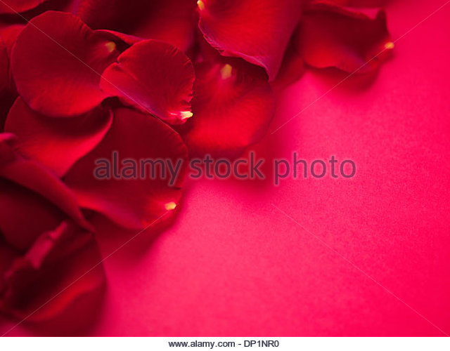 Close up of red rose petals - Stock Image