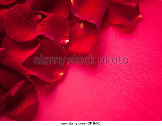Close up of red rose petals - Stock Image