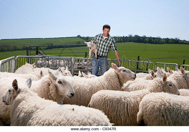 Shepherd holding lamb in pasture - Stock Image