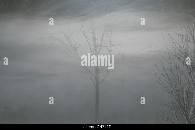 Bare trees in fog at night - Stock Image