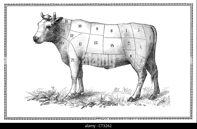 cuts of meat diagram stock photos  u0026 cuts of meat diagram stock images