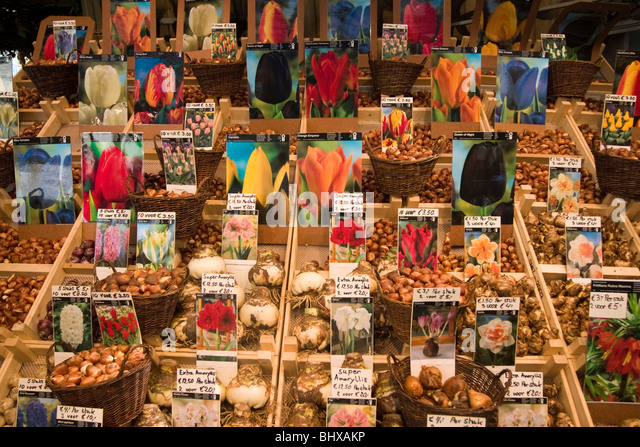 Amsterdam flower market seeds - Stock Image