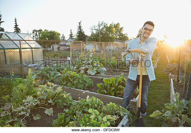 Man standing in community garden with spade - Stock Image