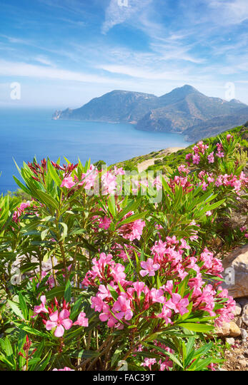Kos - Dodecanese Islands, Greece, view of the Krikello Cape - Stock Image