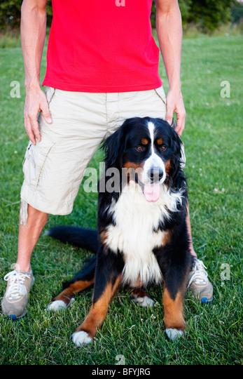 Man With Huge Dog - Stock Image