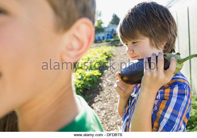 Little boy holding eggplant in community garden - Stock Image