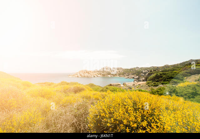 Small pathway to the beach surrounded by beautiful colored flowers. - Stock Image
