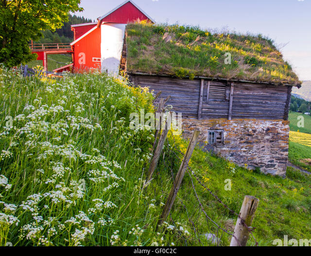 Farms, Red Silo barn, Old Wooden Building with Grass Roof, Grudbrandsdalen Valley near Lillehammer, Norway, More - Stock Image