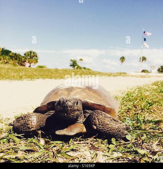 Found this little guy just abobe the beach - Stock-Bilder