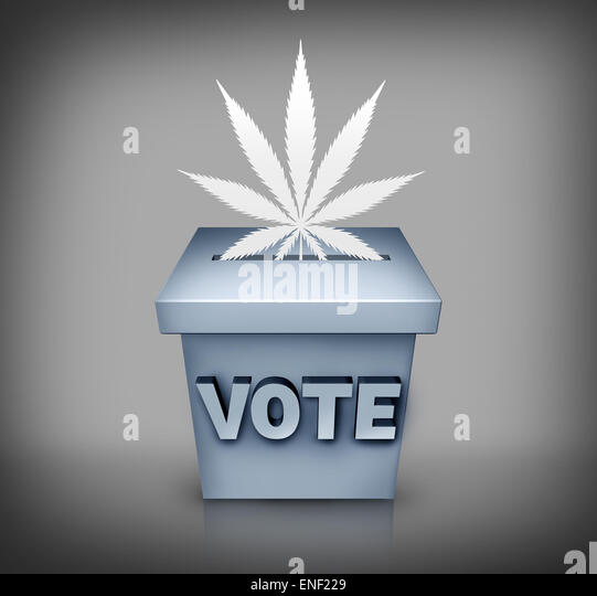 Marijuana election political issue on the vote ballot as a symbol for cannabis medical use or drug law legislation - Stock Image