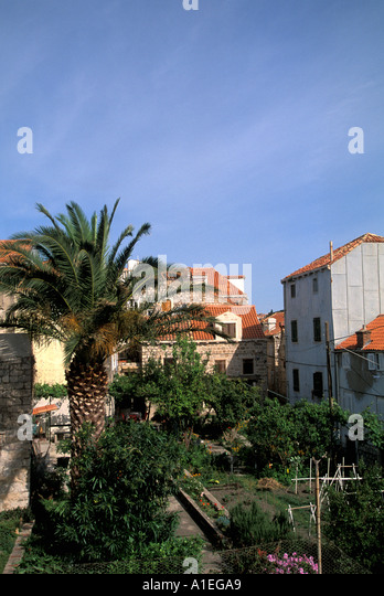 DUBROVNIK Croatia Homes with palm tree - Stock Image
