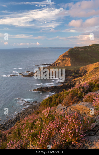 Little Barton Strand from Pencannow Point, Crackington Haven, Cornwall, England. Summer (August) 2013. - Stock Image