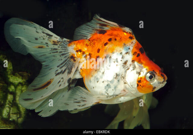 Fish Breeding Aquarium Stock Photos & Fish Breeding ...