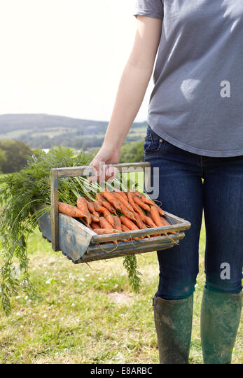 Cropped shot of teenage girl carrying a basket of fresh carrots - Stock Image