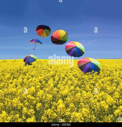 Umbrellas - Stock Image