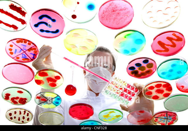 Laboratory, biological, chemical. Analysis of bacterial cultures of bacteria growing in petri dishes. - Stock-Bilder