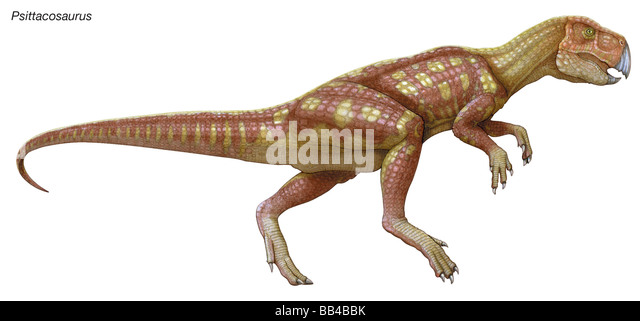 Psittacosaurus, 'parrot lizard,' early Cretaceous dinosaur, small herbivore with a short head, parrotlike - Stock Image
