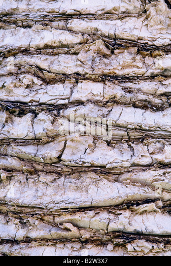 palm texture close up pastel filter - Stock-Bilder