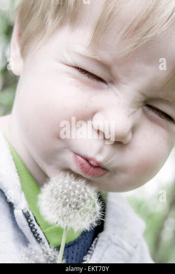 child closes eyes and blows on dandelion - Stock Image