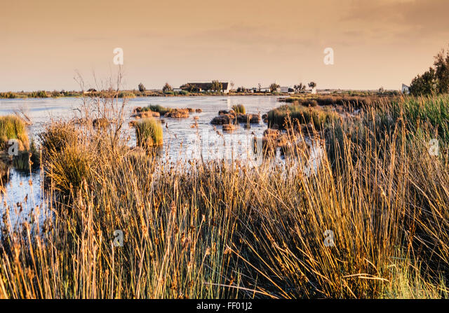 Landscape near Saint Maries de la Mer, Wetlands, Camargue, France - Stock Image