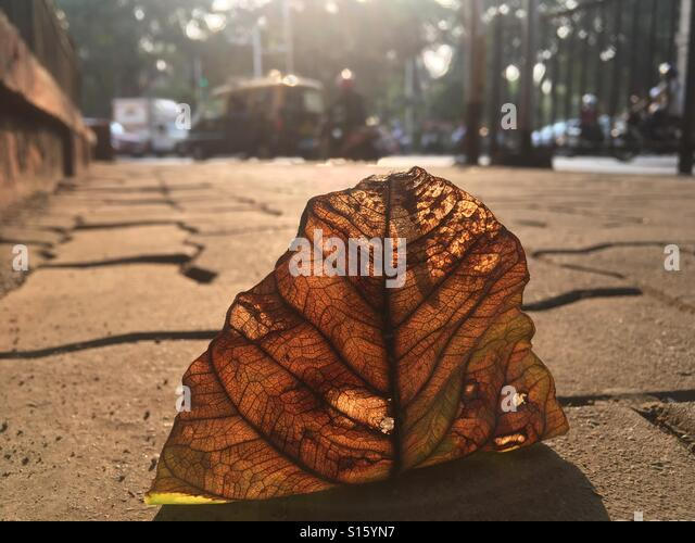 Autumn leaf in Mumbai - Stock-Bilder