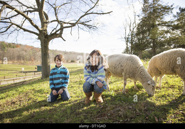 Two children at an animal sanctuary in a paddock with sheep - Stock Image
